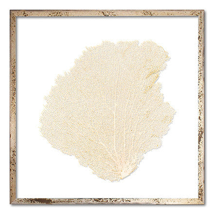 Sea Fans Seafans by artist Karen Robertson Collection at FantaSea Coastal Home beach decor