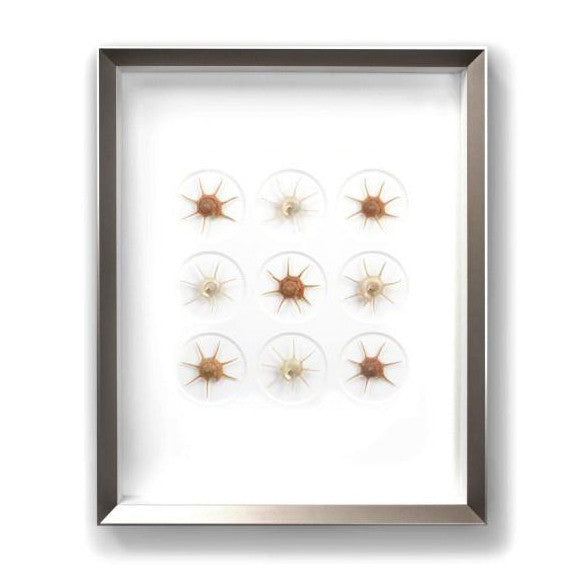 Gilded Starshells by Christopher Marley Artwork