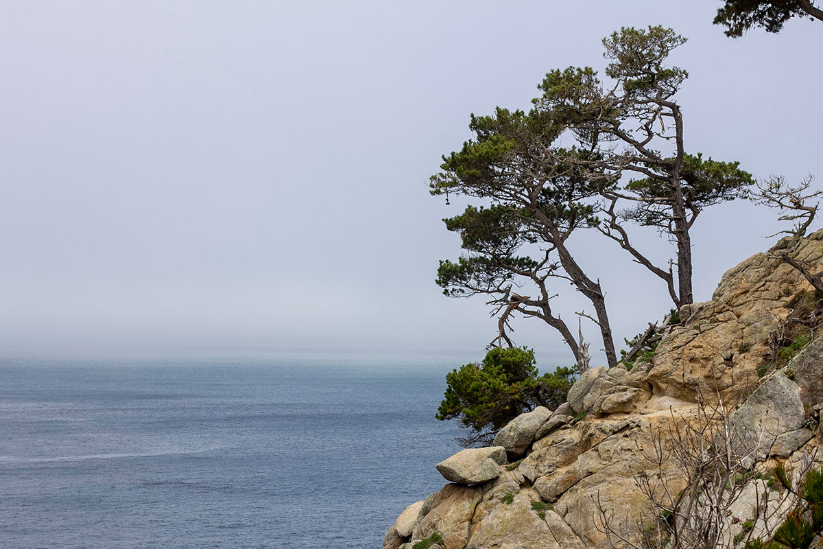 Travel Journal: Point Lobos State Natural Reserve - Color Palette: Sea, Cliff, and Fog
