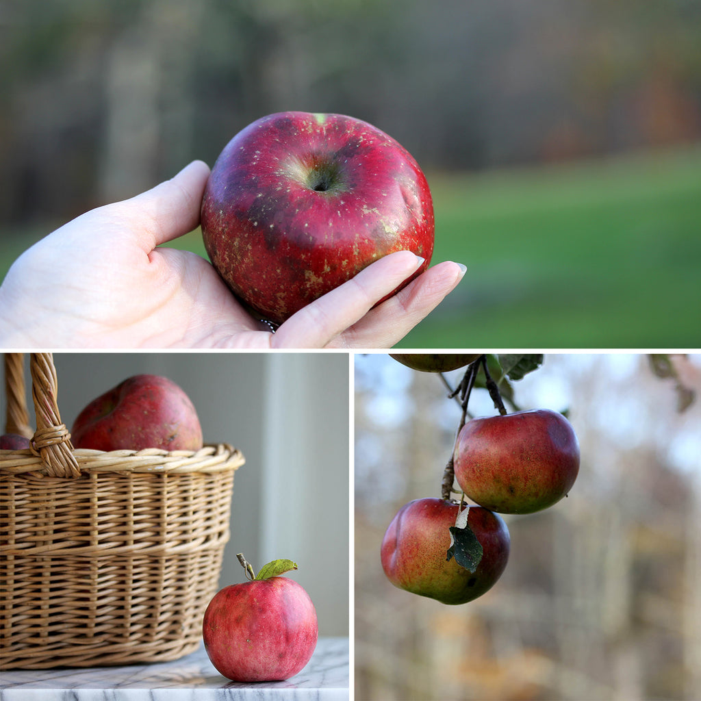 Vermont apple orchard