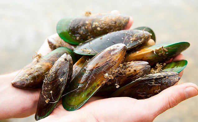 The Miraculous Benefits of Green-Lipped Mussel