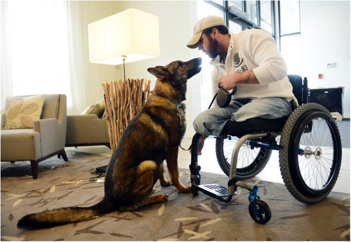 Medical Service Dogs Are The Real Heroes