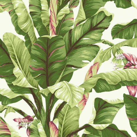 AT7067 Banana Leaf Sure Strip Wallpaper