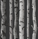 2900-31052 Brewster Distinctive Black Birch Tree Wallpaper
