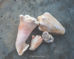 Shells of Plenty