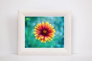 Daisy Photography | Bright Flower | Yellow, Orange, Teal, Green | Macro Photograph | Bright Happy Colors-Photograph-Patti Mustain
