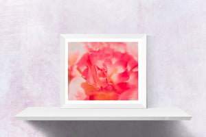 Pink Rose Photograph | Peach Flower | Delicate Tea Rose | Wild Rose | Macro Photography-Photograph-Patti Mustain