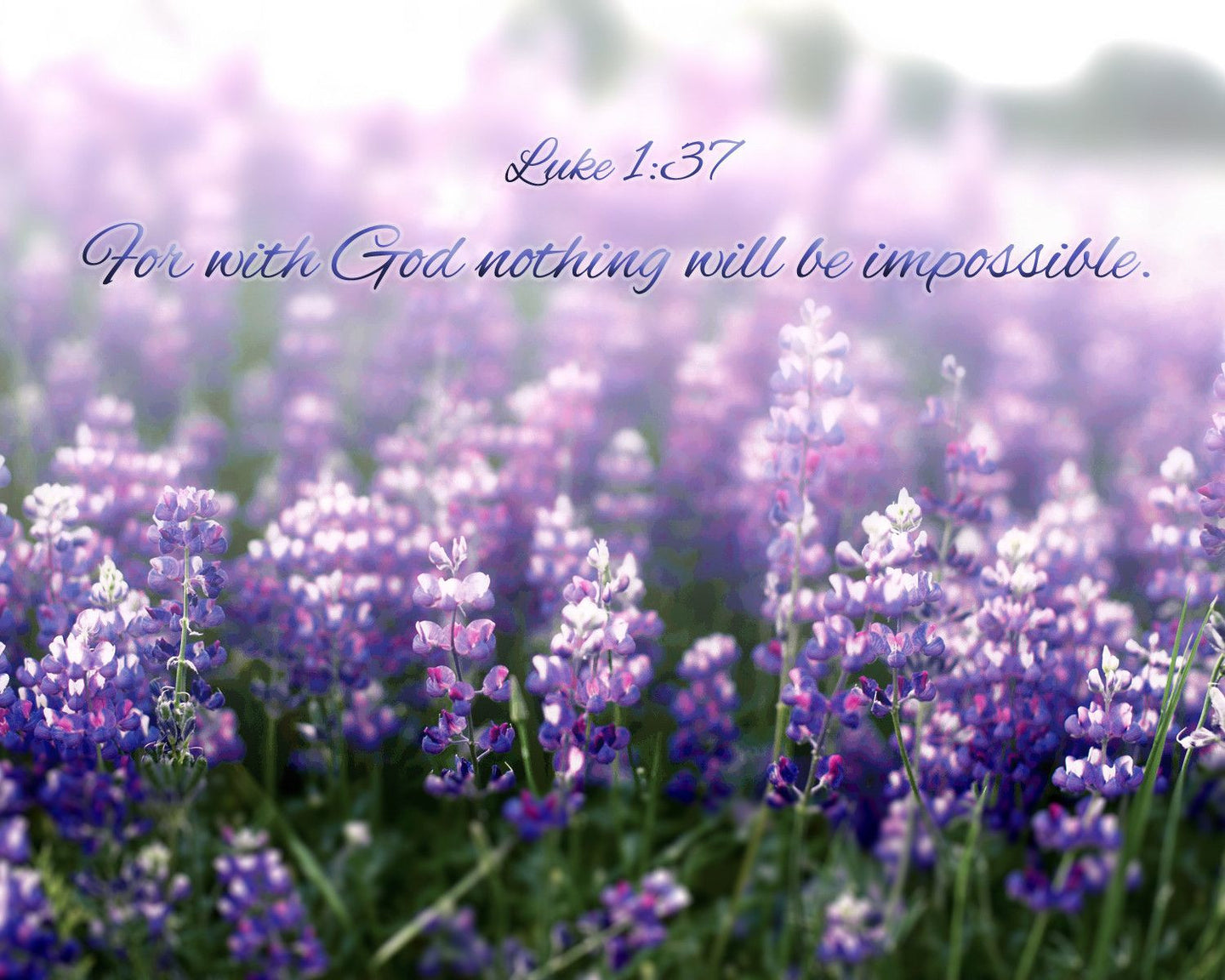 Purple Lupin Flowers Photograph with Bright Spring Colors and Inspirational Scripture | Luke 1:37-Photograph-Patti Mustain