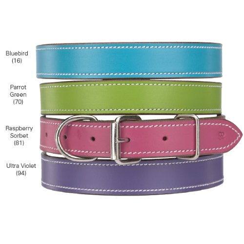 Casual Canine Flat Leather Dog Collars for Dogs