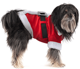 FASHION PET HOLIDAY Costume for Dogs Mr Santa Clause