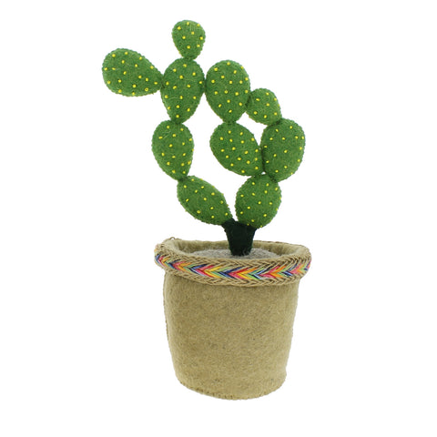 Linked Circle Cactus In Pot