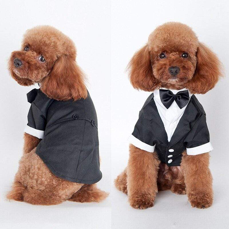 Pet's Adorable Tuxedo Suit - The Palm Beach Baby