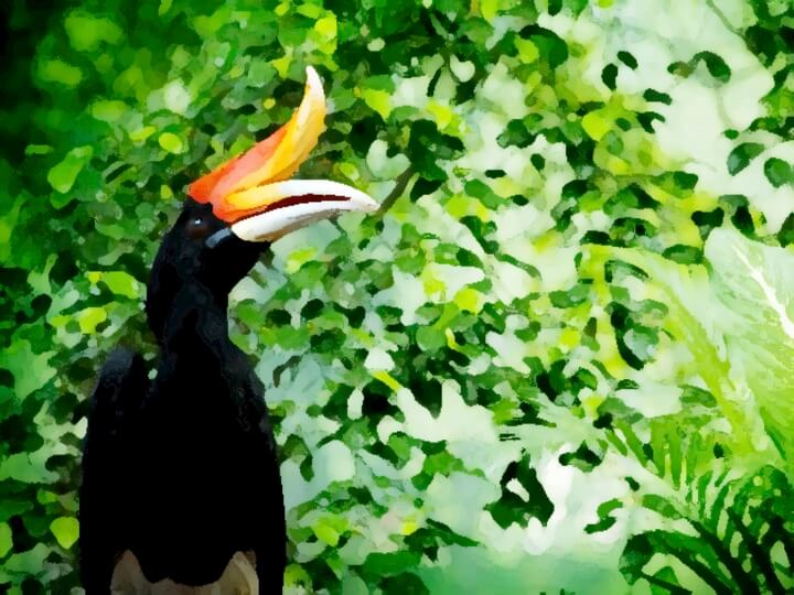 Watercolor image of a hornbill in a tropical rainforest
