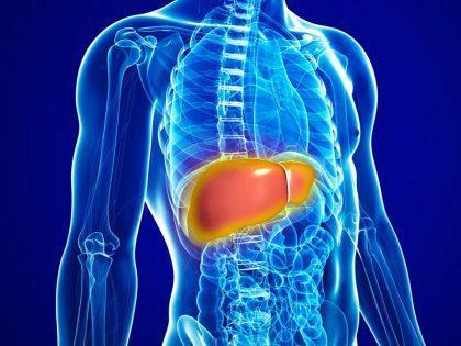 How Intox-Detox Works to Help Liver Function