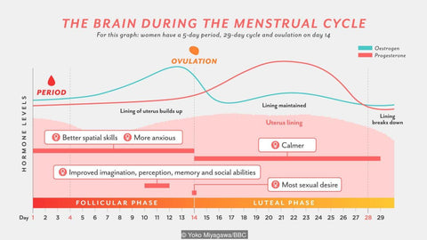 Menstrual Cycle Hormone Chart