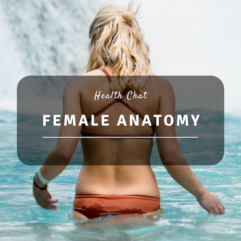 The Female Anatomy