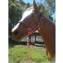 [High Quality Horse Rugs & Accessories Online] - Neddy Wear