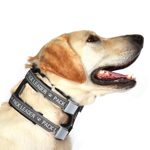 Pack Leader Collar