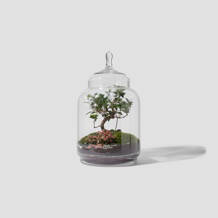 JUNGLE JAR