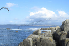 Pacific Grove, CA - Ref: 614