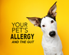 Pet Allergies and Gut Health – what's the connection?