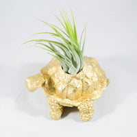 Turtle Air Plant Holder