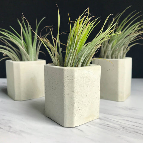 Beveled Square Concrete Air Plant Holder