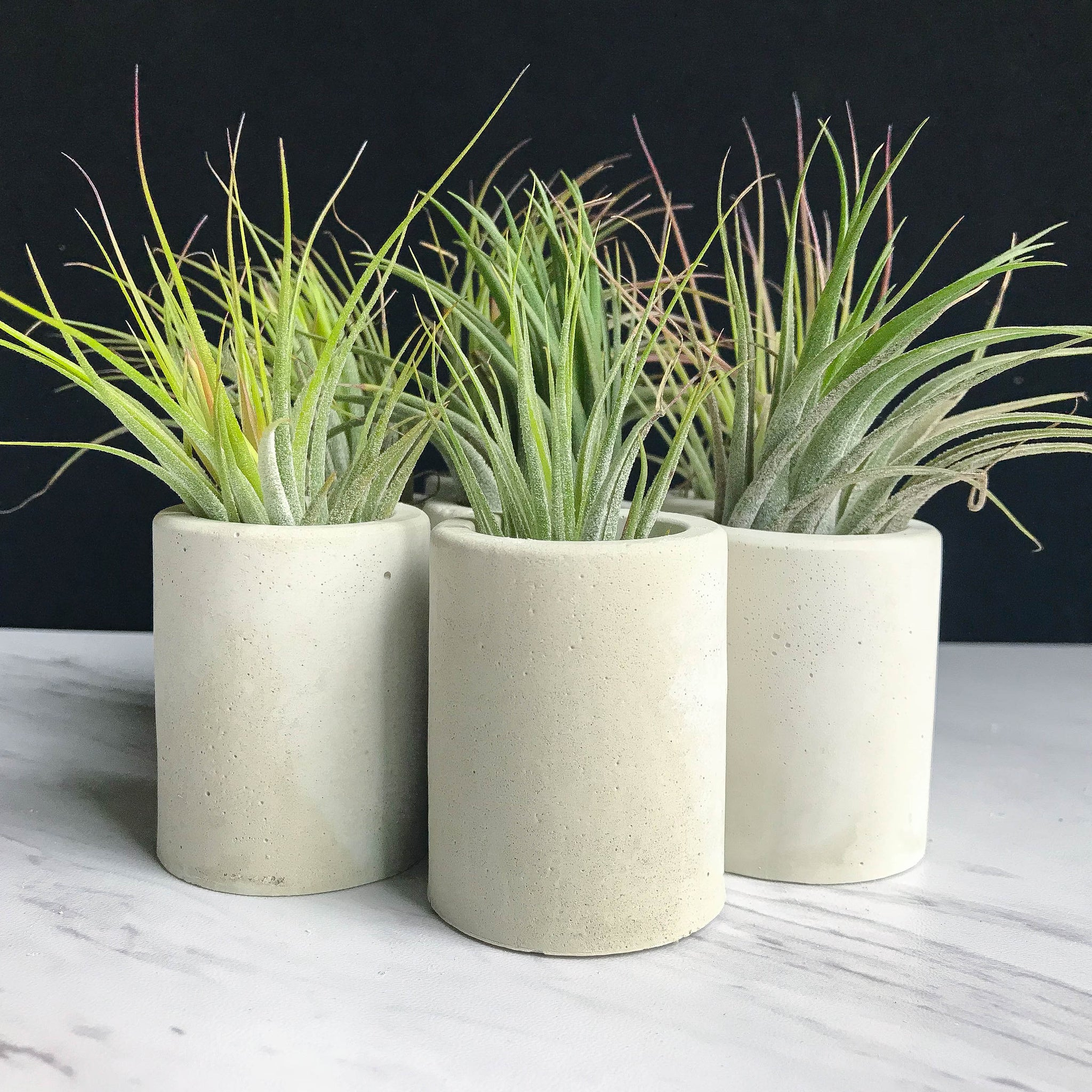 Concrete Cylinder Air Plant Holder - Natural
