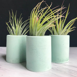 Concrete Cylinder Air Plant Holder - Mint