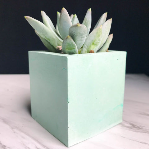 Mint Concrete Planter - Square