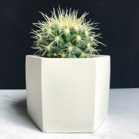 Hexagon Concrete Planter