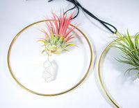 Hanging Crystal Air Plant Holder