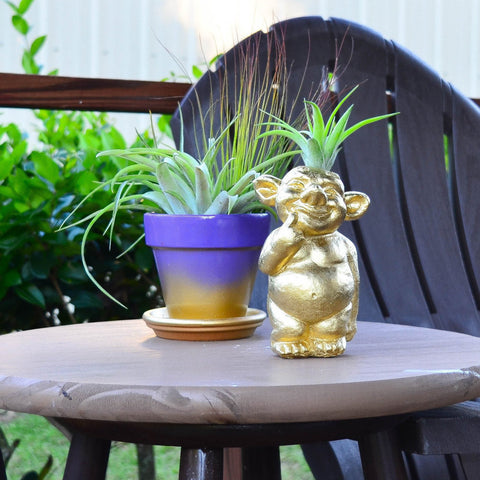 Gold Friendly Air Plant Troll