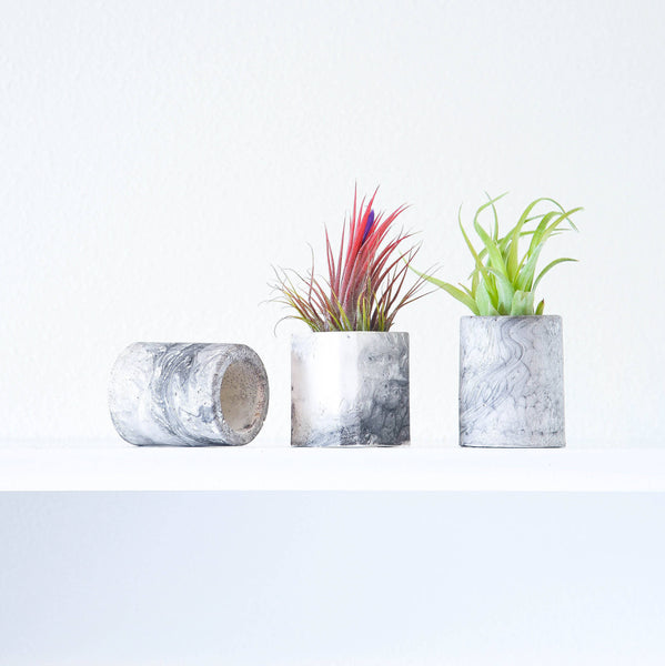 Mini Marble Air Plant Holders