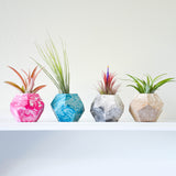 Marble Geometric Concrete Air Plant Holders
