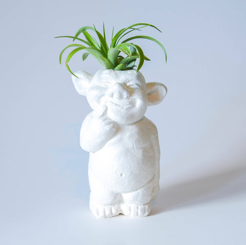 Friendly Air Plant Troll