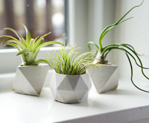 Geometric Concrete Air Plant Holders