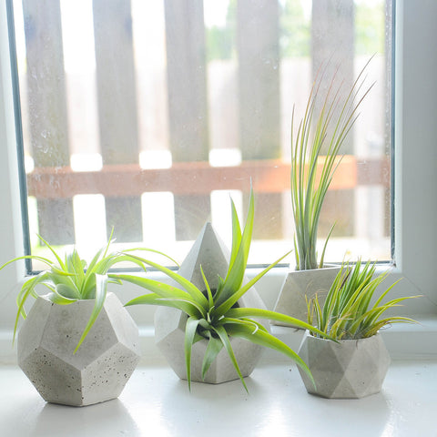 Concrete Geometric Air Plant Holders