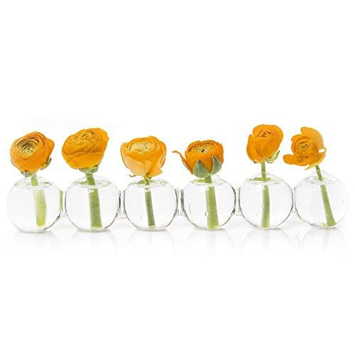 Chive – Caterpillar - Small Clear Glass Bud Vase for Short Flowers, 6 Round Balls and Low Sitting Unique Shape
