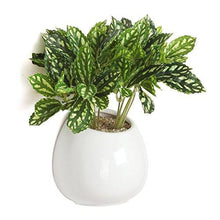 Load image into Gallery viewer, 6 Inch White Ceramic Wall Mounted, Hanging or Freestanding Decorative Flower Planter Vase Holder Display - zingydecor