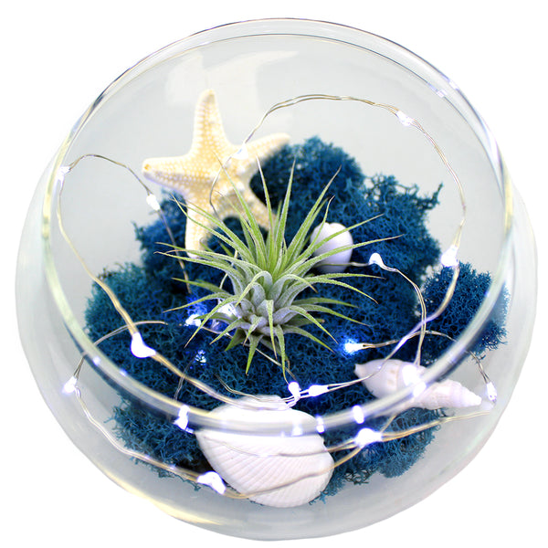 Starry Oasis Glass Terrarium with Live Air Plant & LED Lights