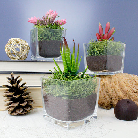 Faux Succulent Terrarium Kit - Down to Earth - Set of 3, 12, or 24