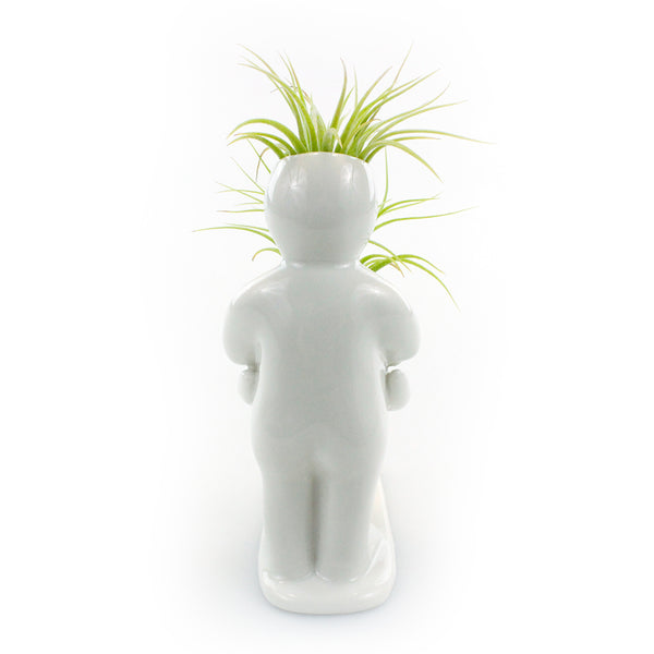 """Baby Bump"" Air Head Complete Kit With Live Air Plant"