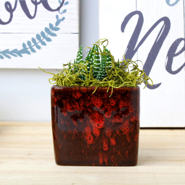 "2"" Succulent in Red Square Two Tone Pot"