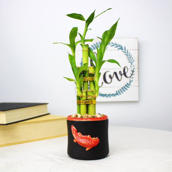 Black Round Koi Design Planter Pot