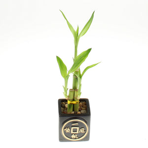 Ceramic square black asian design planter pot with lucky bamboo stalks