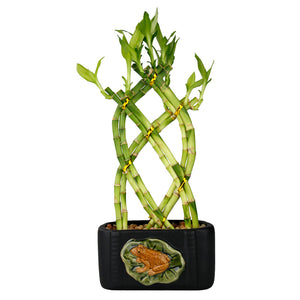 Black Ceramic Rectangle Planter with Frog & Lily Design