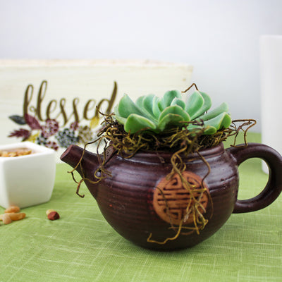 "2.25"" Succulent in Brown Ceramic Teapot Pot"