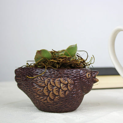 "2.25"" Succulent in Brown Ceramic Bird Pot"