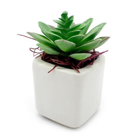 Faux Succulents in White Pots with Spanish Moss